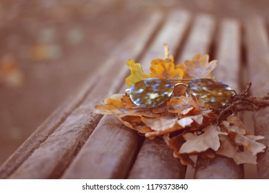 mirror sunglasses and oak branches lie on old wooden bench in park, autumn landscape, retro style