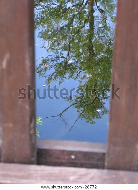 A mirrored tree on a pond surface.