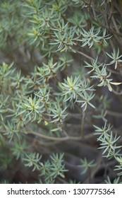 misc botanicals up close