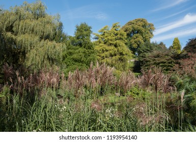 Miscanthus sinensis (Maiden Grass) by the Side of a Lake in a Country Cottage Garden in Rural Devon, England, UK