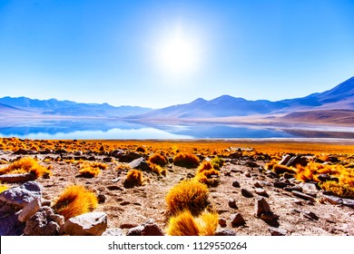 Miscanti Lake is a brackish water lake located in the Altiplano of the Antofagasta Region, in northern Chile. Miñiques volcano and Cerro Miscanti tower over this lake.