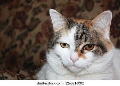 Mismatched eyes calico cat