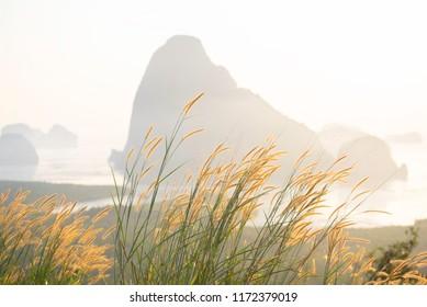 Mission grasses and morning light at Samet-Nang-She view point, Phang-Nga province, Thailand