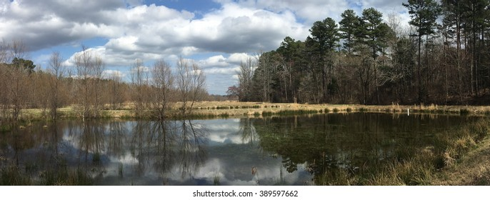 A Mississippi pond in early spring