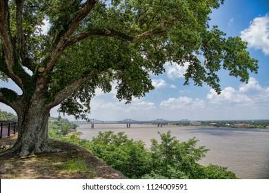 Mississippi River Bridge Framed by Majestic Oak Tree on Banks at Natchez