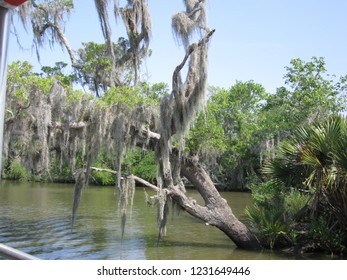 Mississippi, USA - May 21, 2018: Trees in a Mississippi swamp dripping with Spanish Moss.