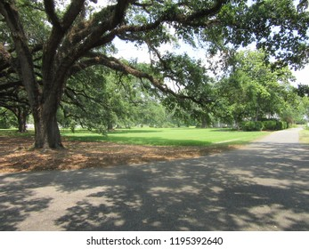 Mississippi/USA - May 12, 2018: A paved walkway cuts a scenic path through a grove of majestic trees.