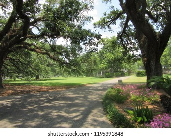Mississippi/USA - May 12, 2018: A tranquil pathway wanders through a grove of large trees on a summer day.