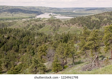 Missouri River breaks with Ponderosa Pine forest in foreground, Charles M. Russell National Wildlife Refuge, Montana, USA