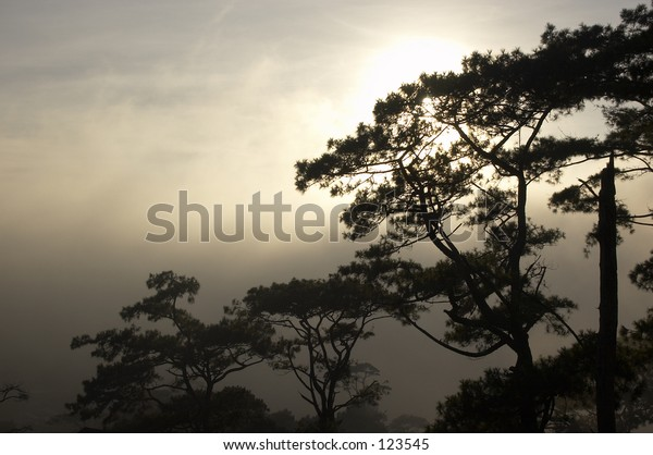 Mist clearing from a tree lined hillside