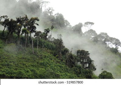 Mist In The Cloud Forest In Ecuador