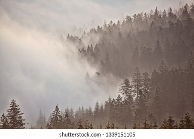 Mist covered forest with mountains at sunrise in the early morning with mysterious light mood