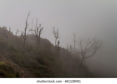 Mist covering a forest on the Pacaya volcano, Guatemala