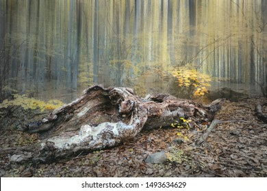 Mist Dramatic forest landscape - old wild forest in autumn season