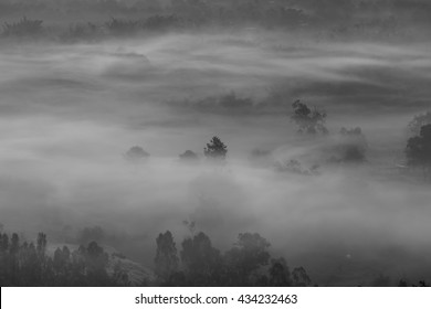 Mist or fog in the forest at Khao Kho, Phetchabun, Thailand.