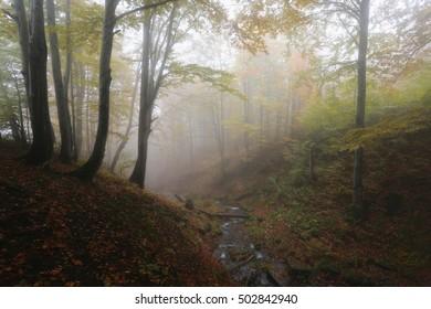mist forest landscape