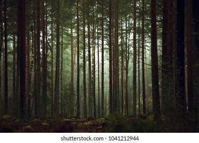 Mist forest nature
