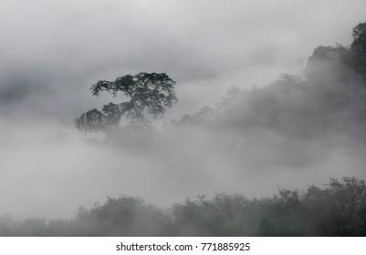 Mist in Hala-bala