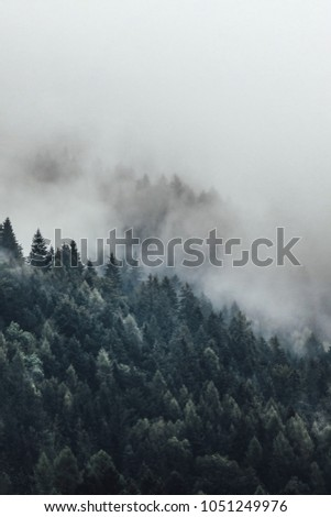 The mist moving into the forest. The weather can change very fast in the mountains.