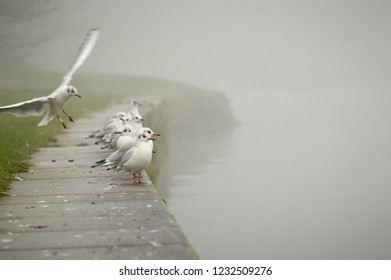 Mist over the river and seagulls on the embankment