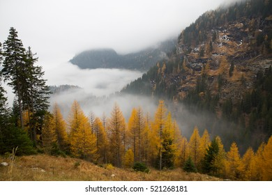 Mist over a Swiss valley with trees in autumn's colours.