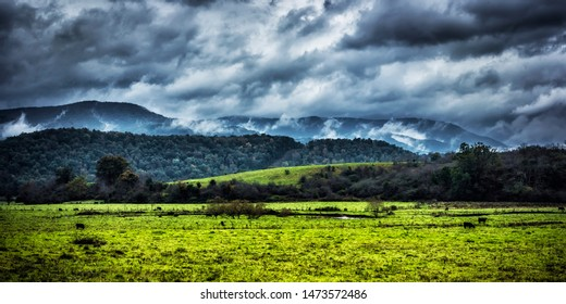 Mist rising from the Allegheny Mountains serves as backdrop to grazing cattle in a pasture field under a stormy sky, Pocahontas County, West Virginia, USA