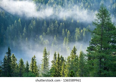 mist rising from valleys in forest in slovakia Tatra mountains. sunny day seen from above, walking above clouds