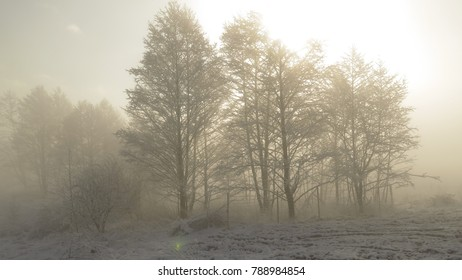 Mist and snow in winter,