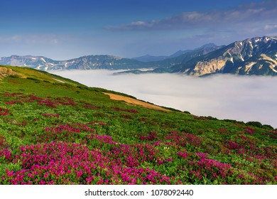 The mist is spreading in the mountains. A field of beautiful flowers.