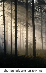 Mist and sunlight in the forest at Southern Finland.