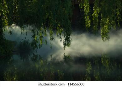 Mist and sunshine on the pond