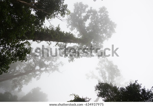 the mist and tree in the forest