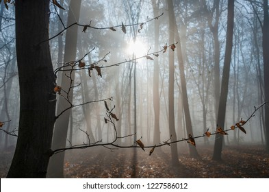 Misterious scene in the autumn forest. Foggy trees and red leaves