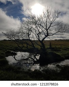 Misterious tree in a river fromArgentina