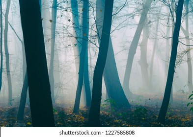 Misterious trees in the misty forest. Tree silhouettes