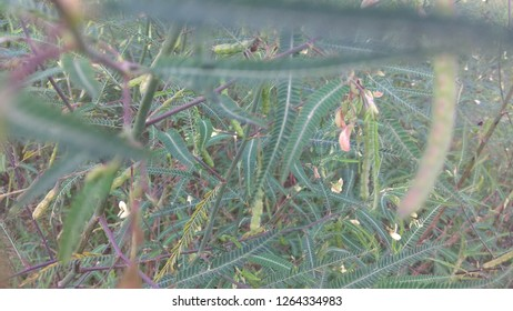 Mistic Tropical Shrubs for your design, texture, pattern, background
