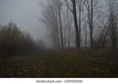 Mistic walking way