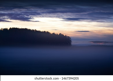 mistical morning forest in fog