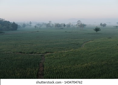 mistical silence landscape with green grass and tree in the morning fog