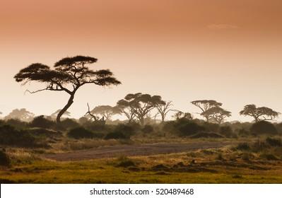 Misty african fogy landscape