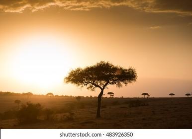 Misty african sunset