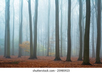 Misty autumn beech forest; ground covered by fallen leaves