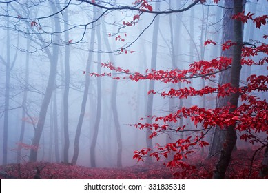 The misty autumn forest. Shallow depth of field