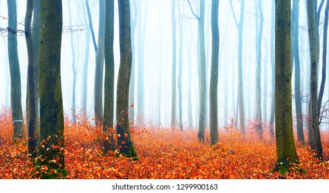 Misty autumn forest with tree silhouettes in Lorraine, France