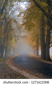 misty autumn morning in the countryside; the rural road goes through a large tree alleys; the leaves of the trees are colored yellow and coincide with the edges of the road