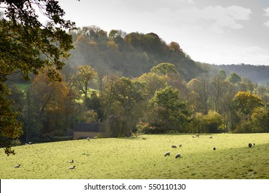 A misty autumn morning in the English countryside, with sheep grazing; near Tetbury, Gloucestershire.