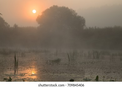 Misty autumn morning. Rising sun shines through fog and reflects in the water of wild pond.