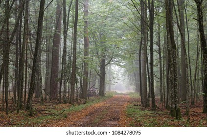 Misty autumnal ground road by end of the day, Bialowieza forest, Poland, Europe