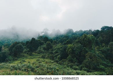 Misty beech forest on the mountain slope in a nature reserve.