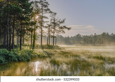 Misty bog landscape with rising sun